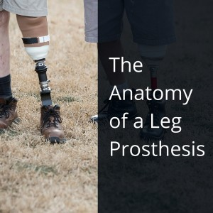The Anatomy of a Leg Prosthesis